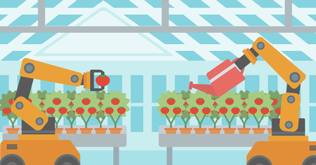 Robot picking tomatoes in greenhouse. Robot working in a greenhouse. Robot harvesting tomatoes in greenhouse. Robot watering tomatoes in greenhouse. Vector flat design illustration. Horizontal layout. 向量圖像