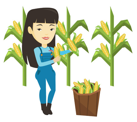Farmer collecting corn vector illustration.