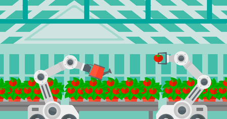 Robot picking tomatoes in greenhouse. Robot working in a greenhouse. Robot harvesting tomatoes in greenhouse. Robot watering tomatoes in greenhouse. Vector flat design illustration. Horizontal layout.