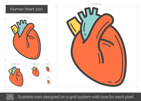 Human heart line icon. Illustration