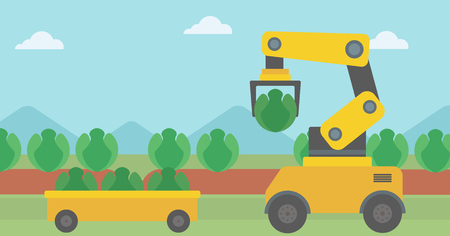 Robot harvesting cabbage at agricultural field. Robot picking cabbage at harvest time. Robot harvests organic cabbage and puts it in wheelbarrow. Vector flat design illustration. Horizontal layout. Çizim