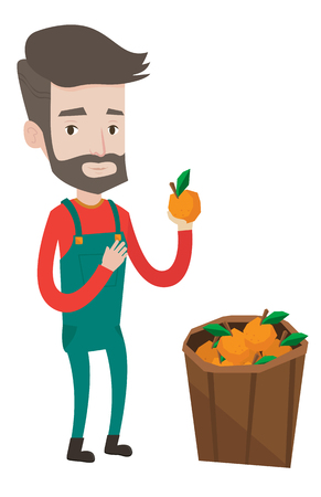 Happy caucasian farmer holding an orange. Hipster farmer with beard collecting oranges. Gardener standing near basket full with oranges. Vector flat design illustration isolated on white background. Çizim