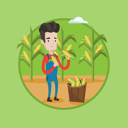 Caucasian farmer holding a corn cob on the background of field. Farmer collecting corn. Farmer standing near basket with corn. Vector flat design illustration in the circle isolated on background.