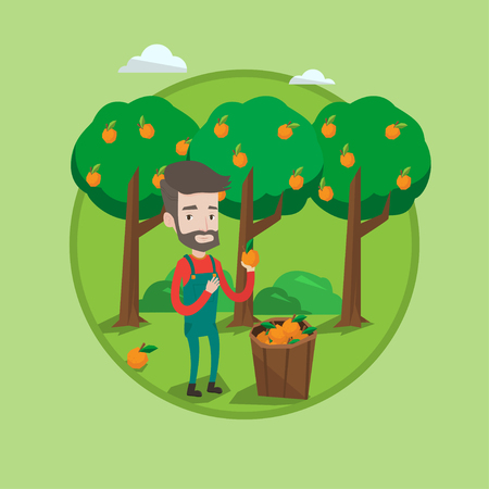 A Farmer holding an orange on the background of orange trees. Farmer collecting oranges. Gardener standing near basket with oranges. Vector flat design illustration in the circle isolated on background.