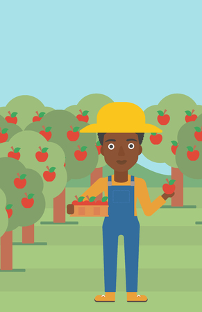 An african-american woman holding a box with apples in one hand and an apple in another on a background of garden with trees vector flat design illustration. Vertical layout.