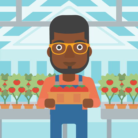 An african-american man holding a box with tomatoes on the background of greenhouse vector flat design illustration. Square layout. 向量圖像