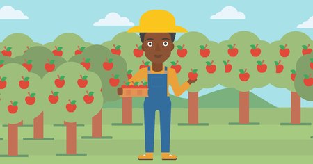 An african-american woman holding a box with apples in one hand and an apple in another on a background of garden with trees vector flat design illustration. Horizontal layout. Illustration