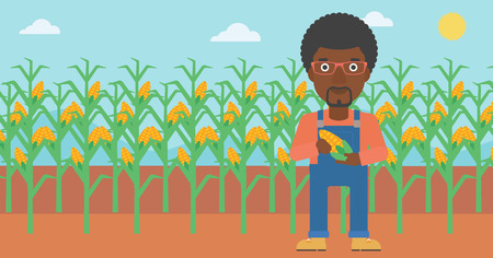 An african-american man holding a corn cob on the background of field vector flat design illustration. Horizontal layout.