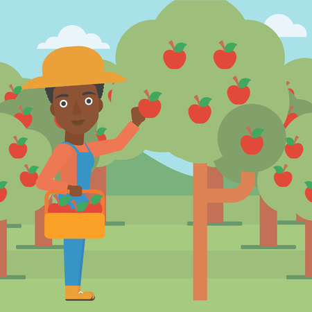 An african-american woman holding a basket and collecting apples in fruit garden vector flat design illustration. Square layout. Illustration
