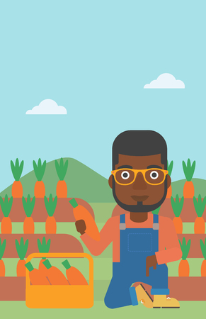 An african-american man collecting carrots in basket on the background of field vector flat design illustration. Vertical layout. Illustration