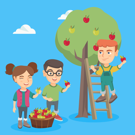 Little caucasian children harvesting apples in apple orchard. Cheerful children picking fresh ripe apples from apple tree and putting in a basket. Vector sketch cartoon illustration. Square layout. Illustration