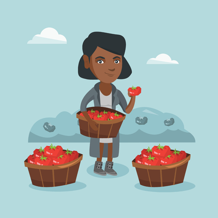 Young african farmer holding basket with tomatoes and showing ripe red tomato on the background of field with bushes of tomatoes. Farmer collecting tomatoes. Vector cartoon illustration. Square layout Illustration