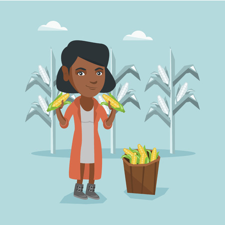 Young african-american farmer standing near basket with corn and holding corn cobs in hands on the background of corn field. Happy farmer collecting corn. Vector cartoon illustration. Square layout.