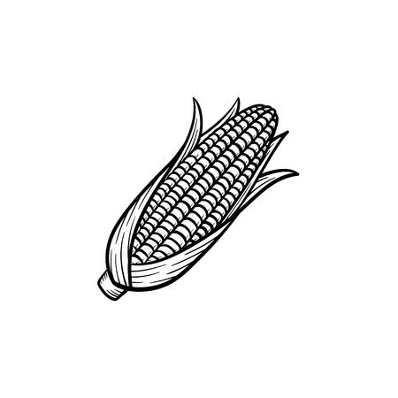 Gezeichnete Popcornmaiskolben-Entwurfs-Gekritzelikone des Vektors Hand. Lebensmittelskizzenillustration für den Druck, Netz, Mobile und Infografiken lokalisiert auf weißem Hintergrund.