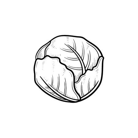 Vector hand drawn cabbage outline doodle icon. Vegetable sketch illustration for print, web, mobile and infographics isolated on white background.