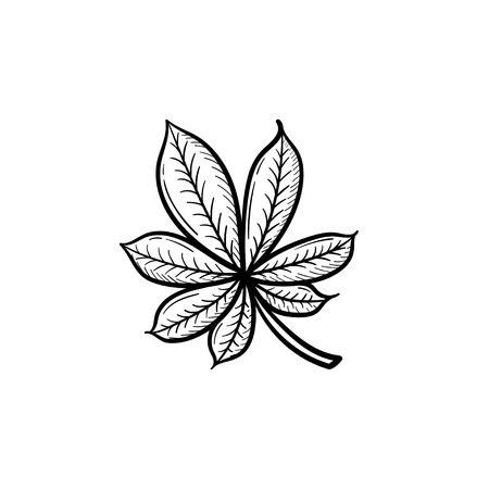 Vector hand drawn chestnut leaf outline doodle icon. Chestnut leaf sketch illustration for print, web, mobile and infographics isolated on white background.
