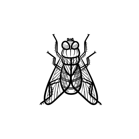 Vector hand drawn fly outline doodle icon. Fly sketch illustration for print, web, mobile and infographics isolated on white background.