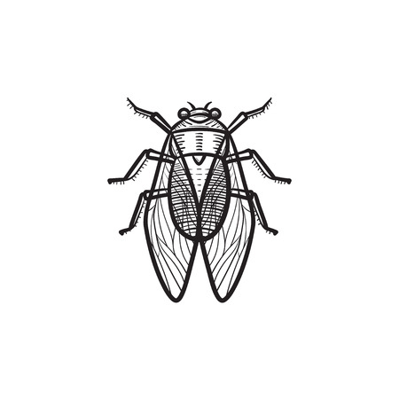 A Vector hand drawn fly outline doodle icon. Fly sketch illustration for print, web, mobile and infographics isolated on white background.
