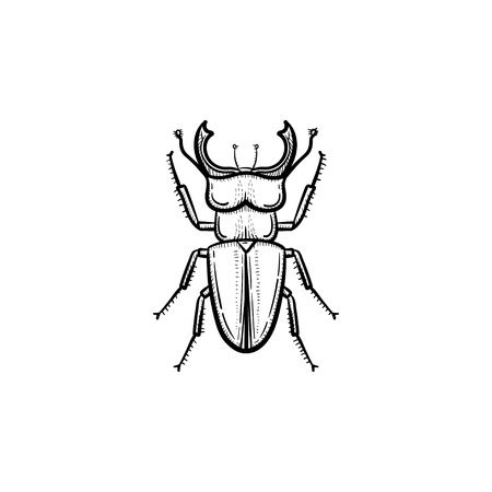 Vector hand drawn beetle outline doodle icon. Beetle sketch illustration for print, web, mobile and infographics isolated on white background.