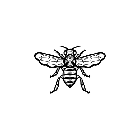 Vector hand drawn bee outline doodle icon. Bee sketch illustration for print, web, mobile and infographics isolated on white background. Ilustracja