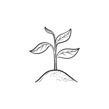 Vector hand drawn Sprout outline doodle icon. Sprout sketch illustration for print, web, mobile and infographics isolated on white background.