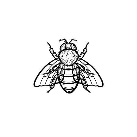 Hand drawn fly outline doodle icon. Fly sketch illustration for print, web, mobile and infographics isolated on white background. Ilustracja