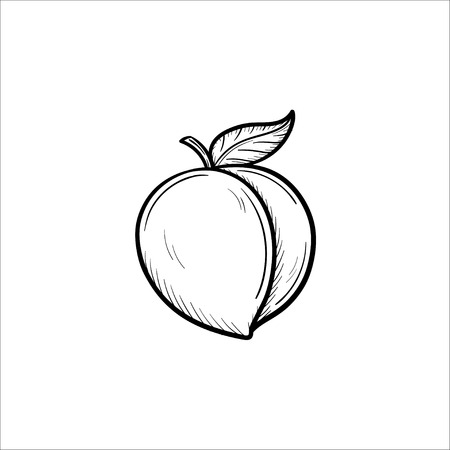 Vector hand drawn Plum outline doodle icon. Plum sketch illustration for print, web, mobile and infographics isolated on white background. Çizim