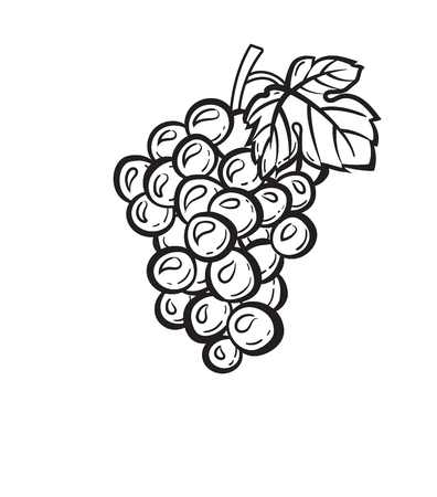 Cluster of grapes with leaf sketch icon vector illustration