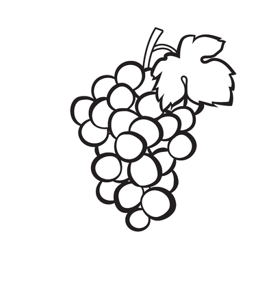 Hand drawn Cluster of grapes vector icon isolated on white background.