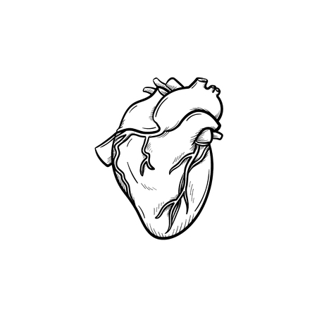 A heart hand drawn outline doodle icon. Anatomic doodle of human's heart as life and health concept vector sketch illustration for print, web, mobile and infographics isolated on white background. Illustration