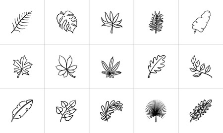 Leaves of plants and trees sketch icon set for web, mobile and infographics. Hand drawn leaves vector icon set isolated on white background.