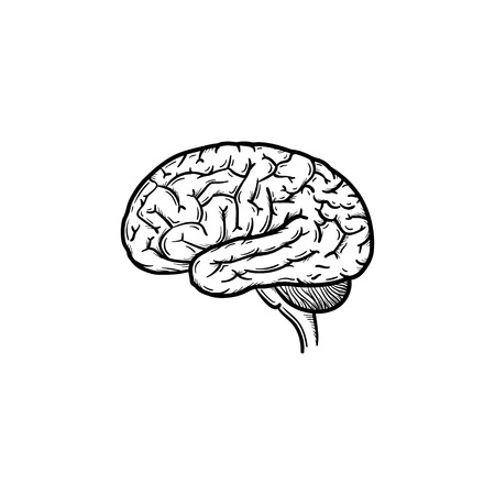 Human brain hand drawn outline doodle icon. Brain as a concept of intelligence and smart way of thinking vector sketch illustration for print, web, mobile and infographics isolated on white background.