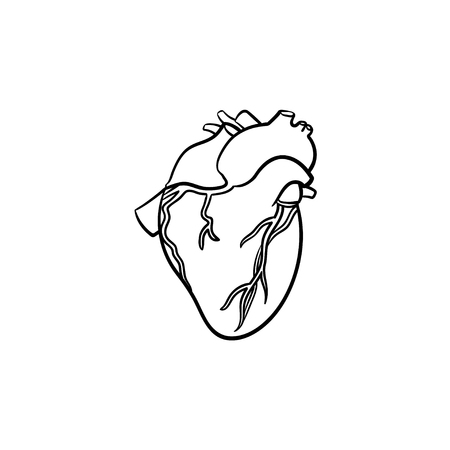 Heart hand drawn outline doodle icon. Anatomic doodle of humans heart with aorta and veins vector sketch illustration for print, web, mobile and infographics isolated on white background.