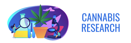 Scientists with magnifier doing cannabis innovations research. Marihuana products innovation, cannabis research, cannabinoid product science concept. Header or footer banner template with copy space.