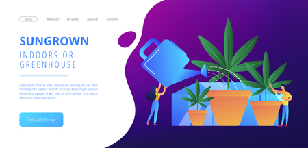 Cannabis cultivation concept landing page. 向量圖像