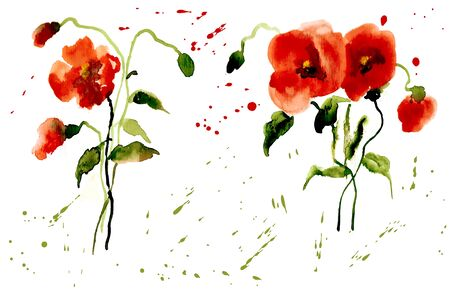 Flowers Poppies Red with Splashes of Watercolor for your Design
