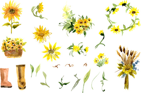 Composition of yellow sunflower painted in watercolor for your design Çizim