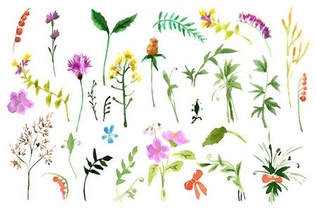 야생 꽃 컬렉션. 수채화 그림 일러스트