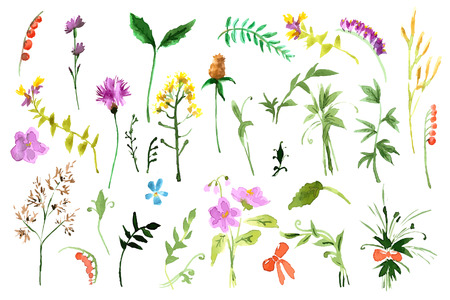 Wild flowers collection. Watercolor illustrations Ilustração