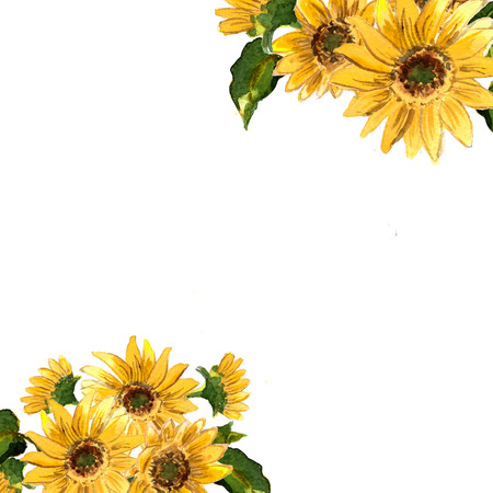 The pattern of blooming yellow flowers sunflower painted in watercolor for your design. Raster illustration Zdjęcie Seryjne