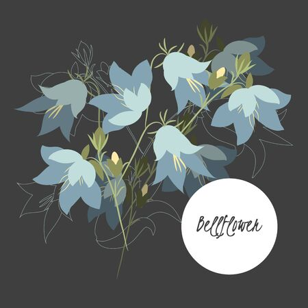 campanula: Illustration with beautiful flowers bellflower. Vector
