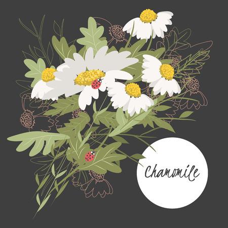 chamomile: Illustration with beautiful flowers chamomile. Vector Illustration