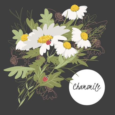 chamomile: illustration chamomile flowerSpring chamomile flowerGreeting card chamomileSummer composition chamomileSpring chamomile flowerGarden chamomile flowerBeautiful chamomile flowerDelicate chamomile