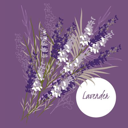 espliego: Ilustración de la flor de la lavanda
