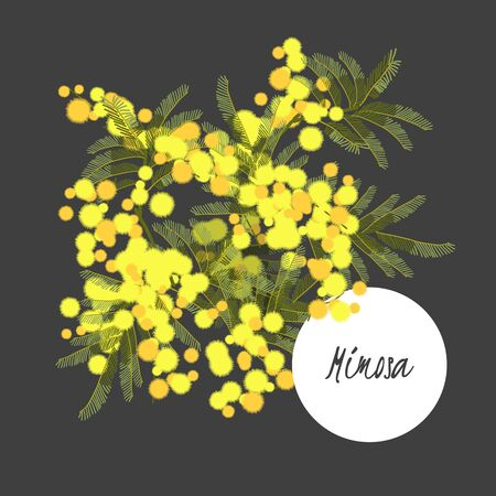 mimosa: Floral retro vintage background, vector illustration, mimosa Vettoriali