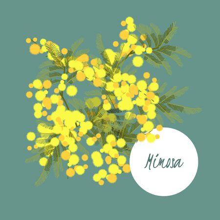mimosa: Floral retro vintage background, vector illustration, mimosa Illustration