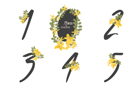 wort: Floral herb St. Johns wort collection numbers in vintage color. One, two, three, four, five - signs vector