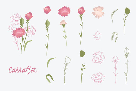 carnation: Greeting card Spring carnation flowerSummer composition Beautiful Delicate collection