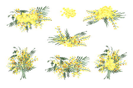 Set of Hand-Drawn Mimosa, Painted in Watercolor. Illustration