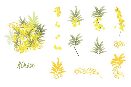 Abstract flower spring illustration. Mimosa flowers